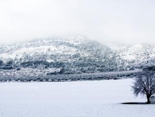 Neu del sud