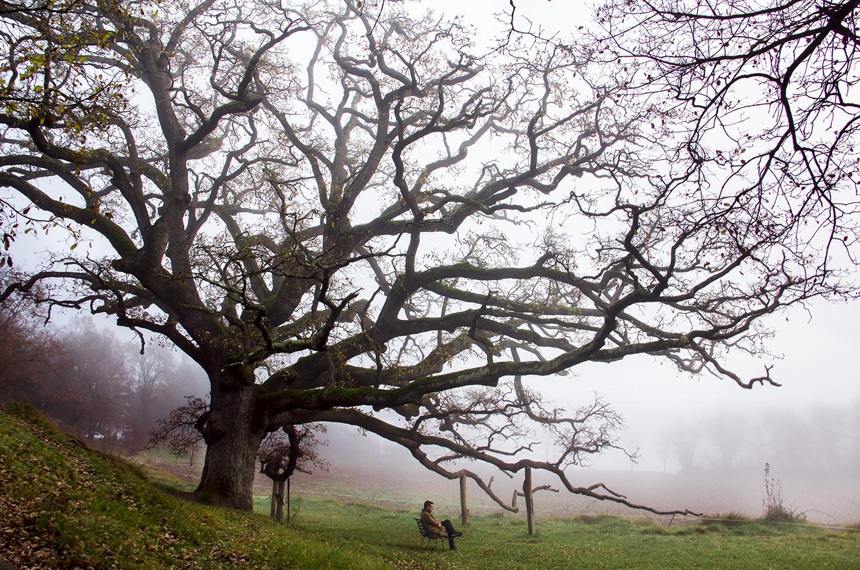 foto-arbol-pirineo