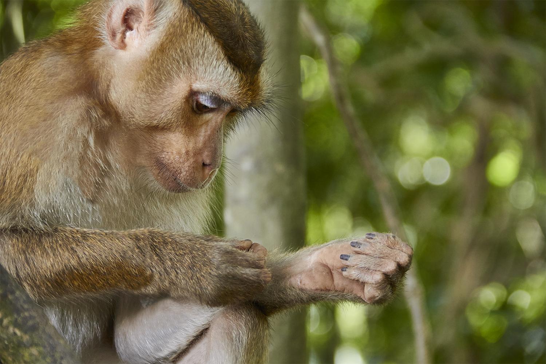 fotos-fauna-thailandia